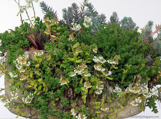 http://fotobabij.blogspot.com/2015/06/kompozycja-roslinna-1re-succulent.html