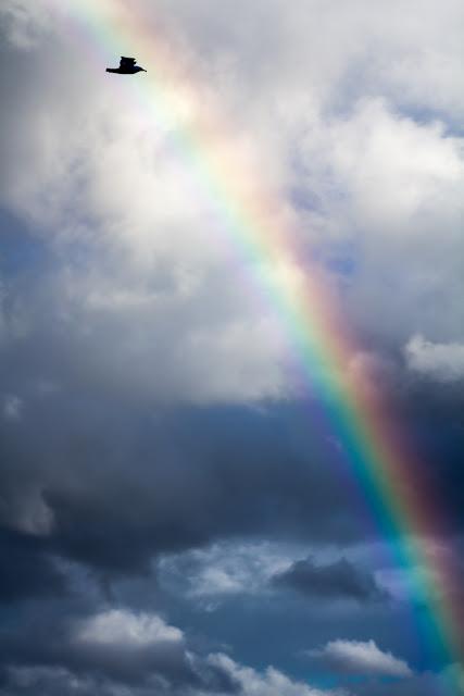 'Sobre el arco iris' de Carlos Larios