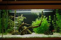 odmulanie akwarium
