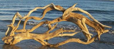 7 Jenis Kayu yang Cocok Untuk Aquascape