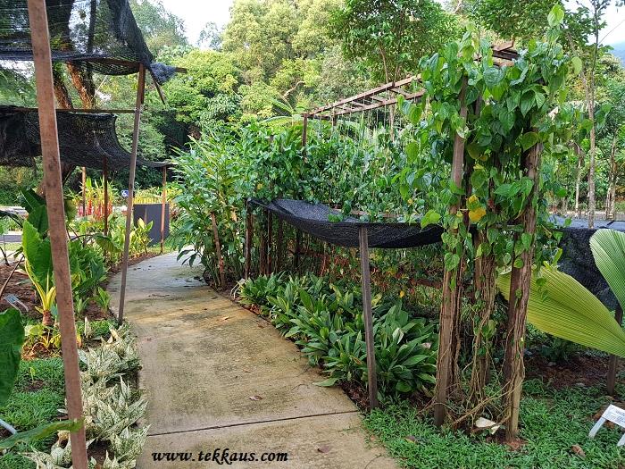 Perak Botanical Garden Taiping