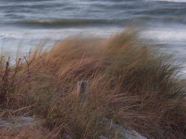 Der starke Wind lässt das Dühnengras tanzen