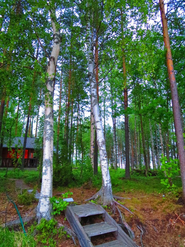 koivu rantasauna sauna birch mökkisauna summer cottage