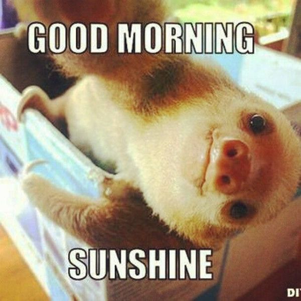 good morning sunshine
