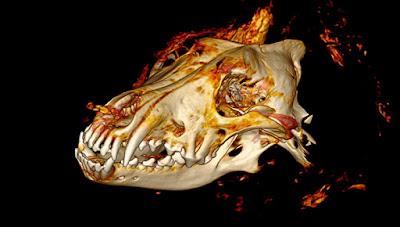 Κεφάλι λύκου ηλικίας 40.000 ετών βρέθηκε άθικτο στη Σιβηρία