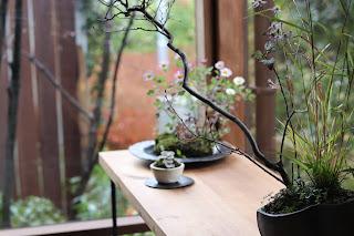 アシズリノジギク、御所車、ヤマコウバシとキヨスミシラヤマギク等の寄せ植え盆栽