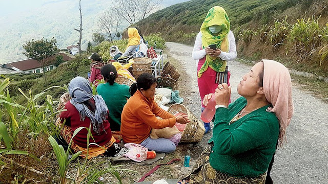 Workers keep away from hill tea estates