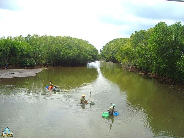 Hutan mangrove di Pulau Santen.