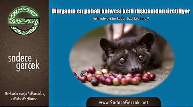Dünyanın en pahalı kahvesi kedi dışkısından üretiliyor