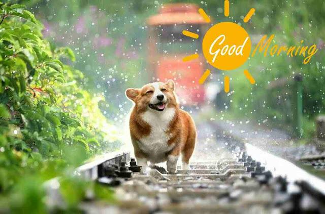 Awesome good morning image of cute dog