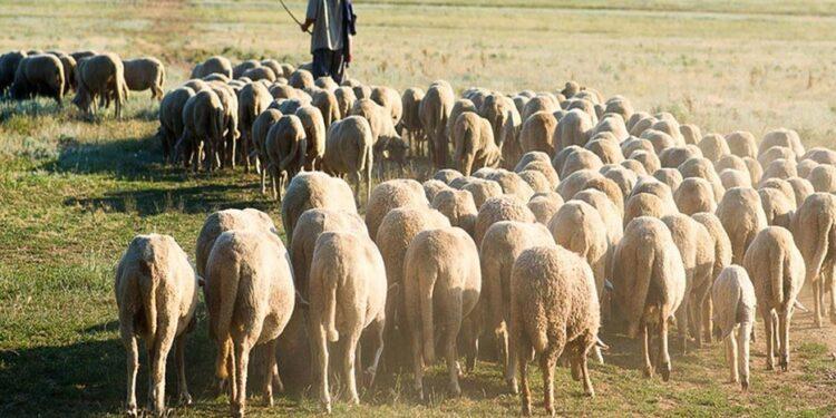 Πιέζουν για σταθερή τιμή στο γάλα οι κτηνοτρόφοι της Ξάνθης