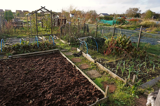 the allotment before photo - Carrie Gault 2018