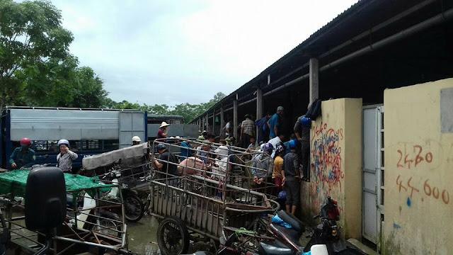 Khan hiếm heo, thương lái tranh nhau chọn mua heo tại điểm thu mua ở chợ.