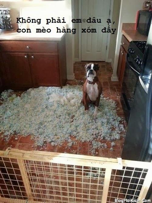 ảnh chế chú chó tội nghiệp