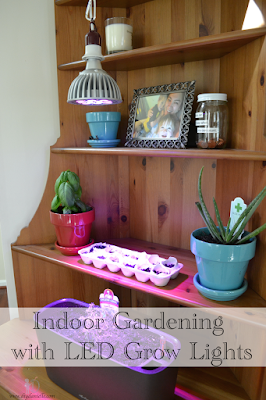 Indoor Gardening with LED Grow Lights from Grow Hobby