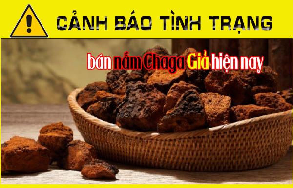 Cảnh báo tình trạng bán nấm Chaga Giả hiện nay