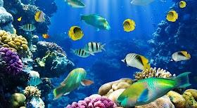 मछलियों के बारे में रोचक तथ्य - Fish Facts in Hindi