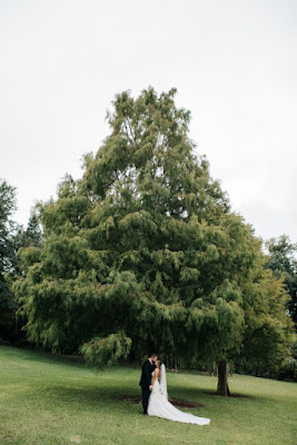bride and groom under large tree