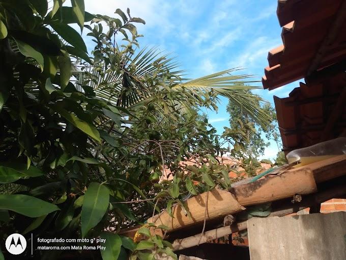 Mata Roma Blog deseja a todos Feliz dia do agricultor, veja belas fotos da natureza.
