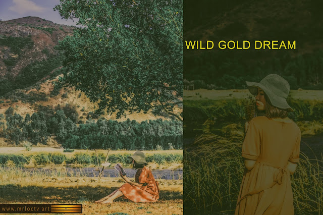 Giấc mơ vàng hoang dã | Bộ sưu tập ảnh câu chuyện