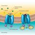 Transport aktif pada Mikroorganisme