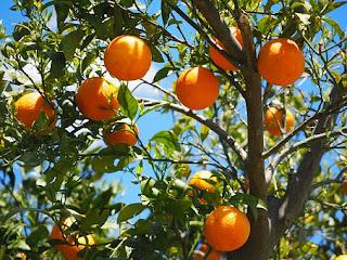 Melebebatkan buah jeruk