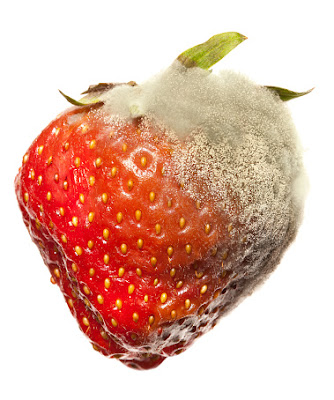 jamur kapang pada buah dan makanan