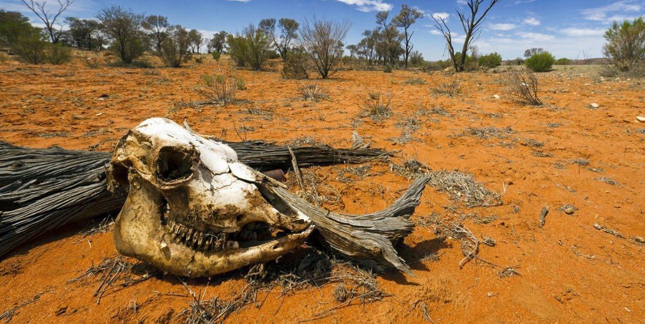 Cambiamento climatico, Clima: biodiversità mondiale a rischio collasso.