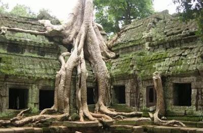 Pohon Kapas Sutra, Kamboja