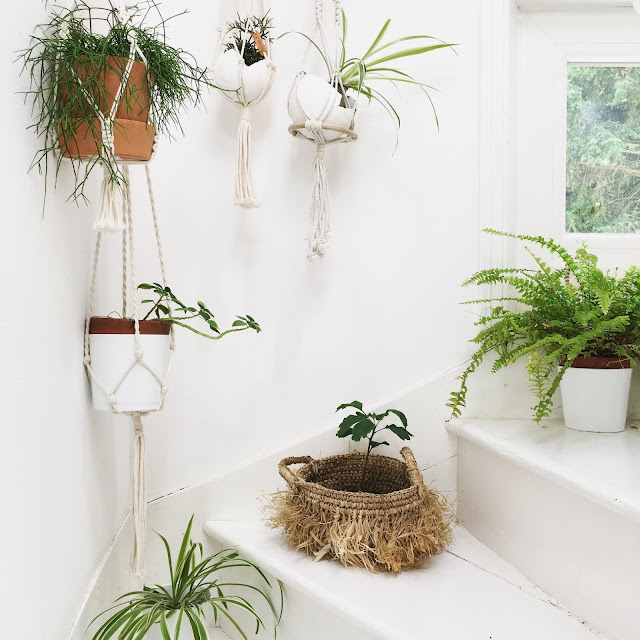 Plantes vertes / Blanc / Atelier rue verte /