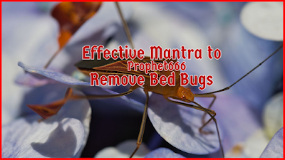 Effective Mantra to Remove Bed Bugs