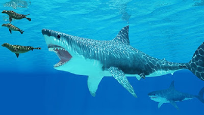 Prey scarcity and competition led to extinction of ancient monster shark
