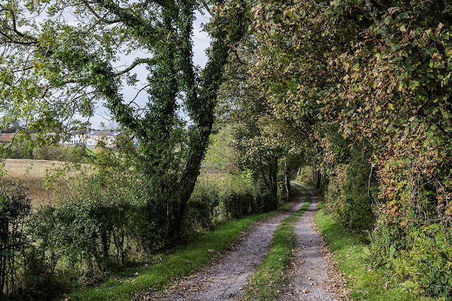 Tree lined lane, Cleator Moor