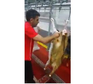 فيديو.. أسرع جزار في عملية سلخ الخرفان.. 3 في دقيقة واحدة