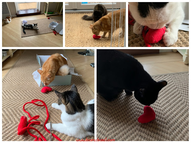 What's In The Box ©BionicBasil® Gus & Bella Take Meowt Valentine's Box - The B Team In Action