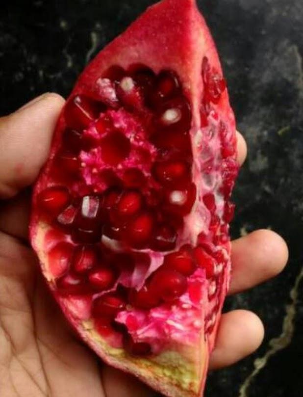 Delima Merah Pomegranate Bandung
