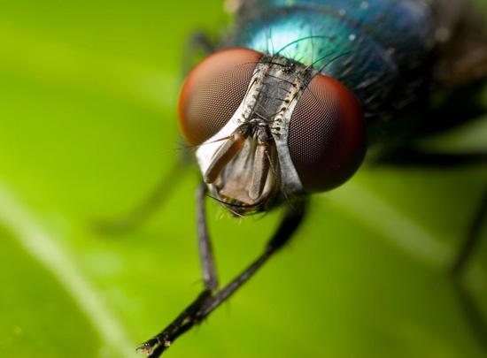 Petua Cara Halau Lalat dan Kutu