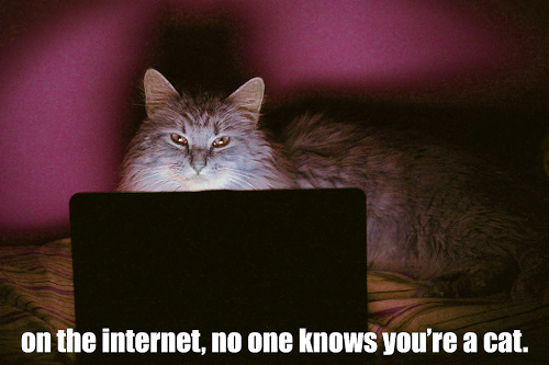 """Funny cat: """"On the Internet, no one knows you're a cat"""""""