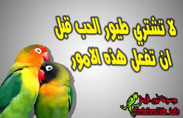 تربية  طيور الحب نصائح قبل الشراء