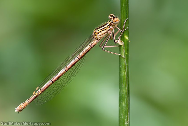 Dragonfly Pics