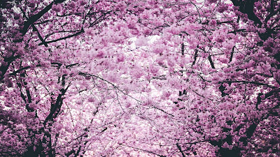 Spring Captions,Instagram Spring Captions,Spring Captions For Instagram