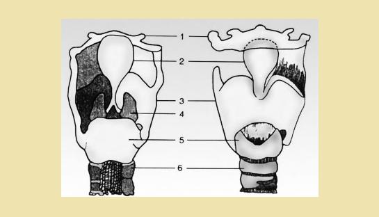 Penjelasan tentang Bagian-Bagian Pada Pangkal Tenggorokan materi pelajaran kelas 5