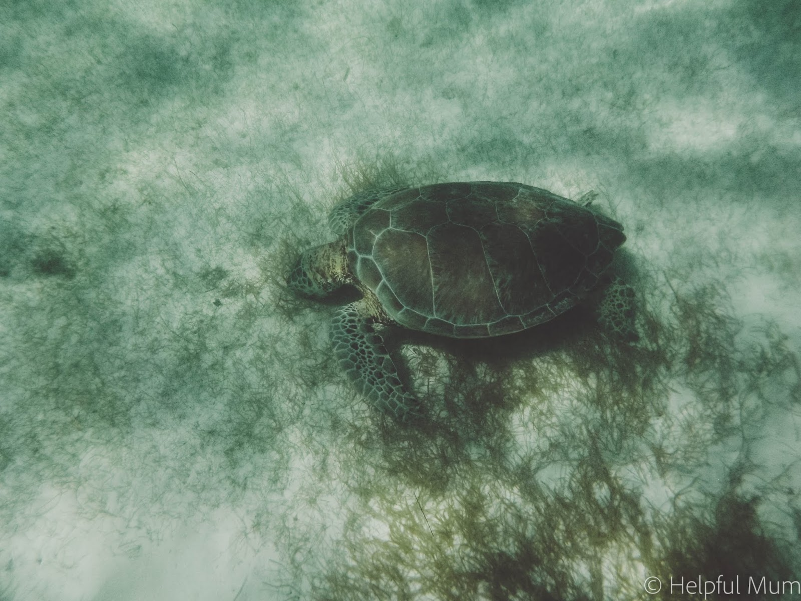 sea turtle in the ocean