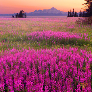 landscape photography by Steve Ellison - photographer in Reno, Nevada