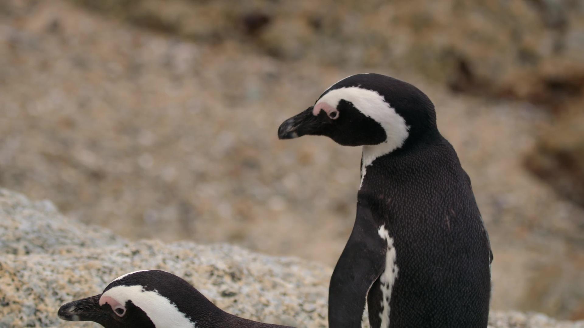 Colonia Pingüino (2021) Temporada 1 1080p WEB-DL Latino