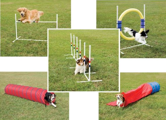 Dog Agility Training For Puppies
