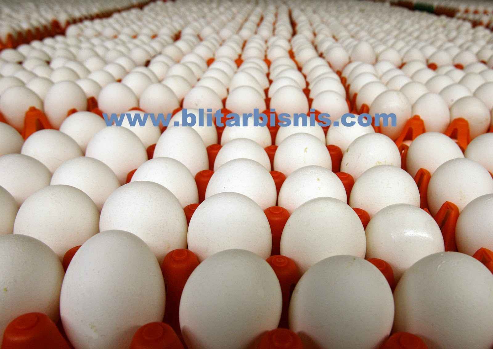 Blitar Supplier Telur