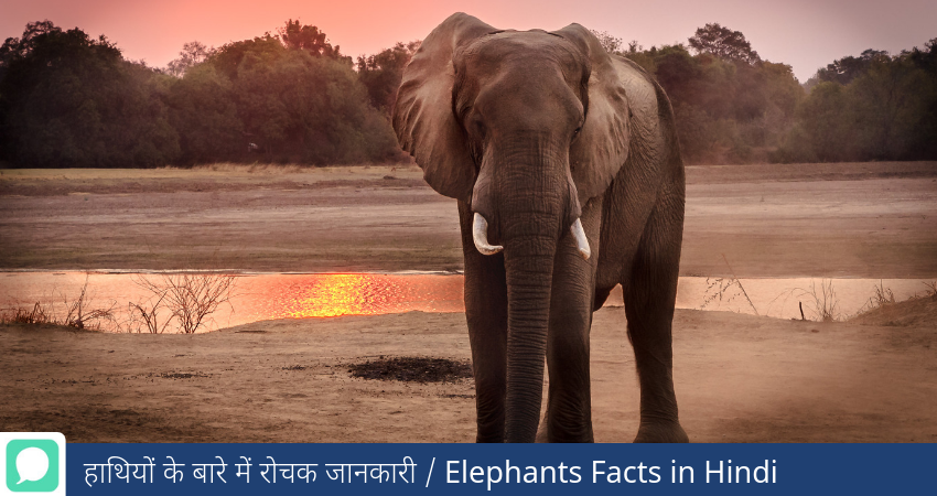 Things About Elephant in Hindi