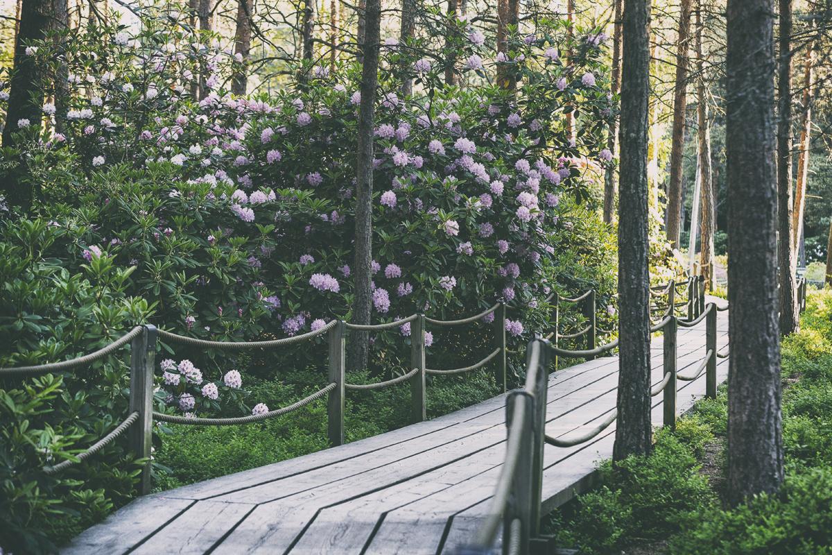 Haagan Alppiruusupuisto, Helsinki, rhodopuisto, alppiruusut ruusupuisto, suomi, Finland, valokuvaaja, photographer, Frida Steiner, Visualaddict, visualaddictfrida, kukka, luonto,