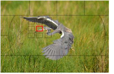 Fokus Kamera Tips dan cara untuk menggunakan kamera DSLR untuk pemula